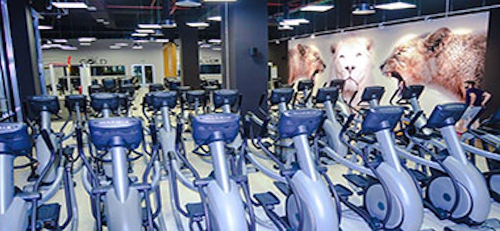 Nine Fitness Pinto