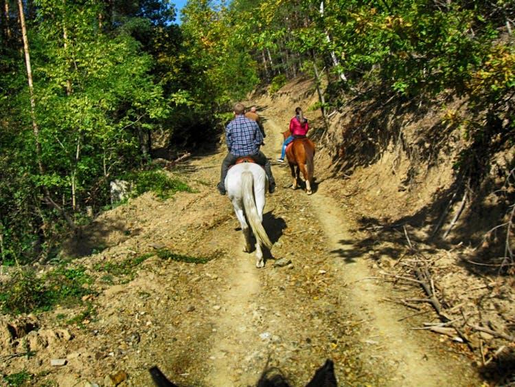 Конна база Wild horse