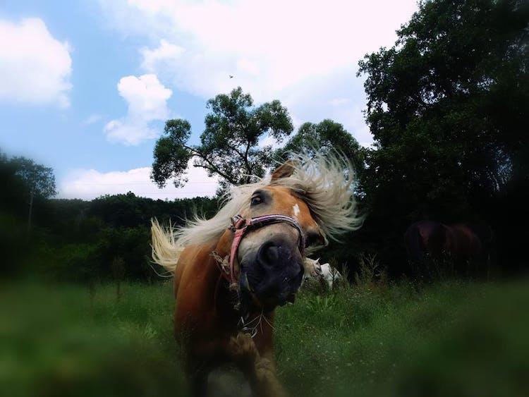 Конна езда с. Долище